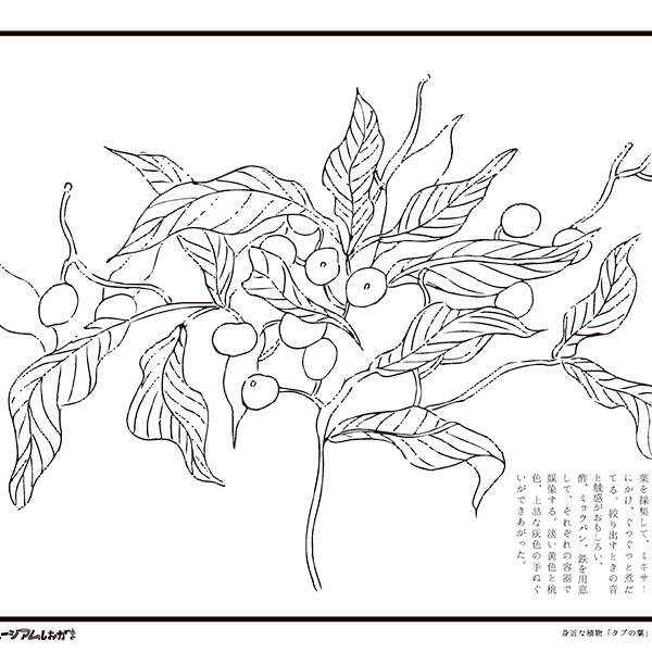 身近な植物を彩ろう